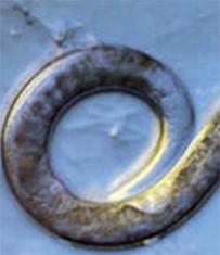 как паразиты выходят из человека через кожу