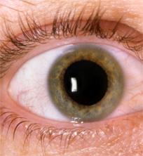 Эпидемический паротит у детей симптомы и лечение фото